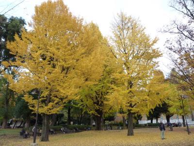 2014.11.30銀杏-4