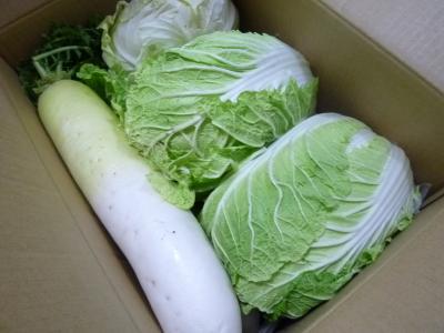 2015.1.4野菜-1