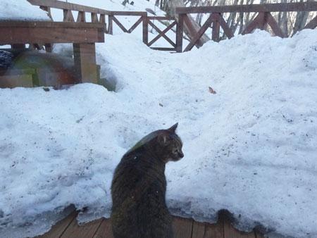 雪が融け始め・・・1
