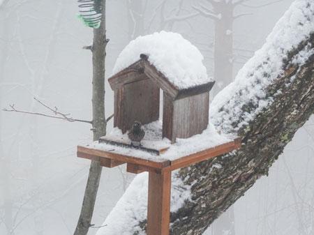 今日は雪1