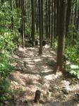 熊野古道・ツヅラト峠7-06