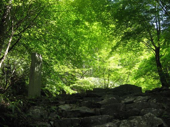 熊野古道・ツヅラト峠8-16