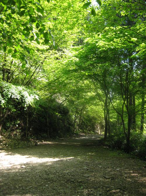 熊野古道・ツヅラト峠8-17
