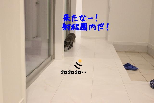 1jCNZ387n5JHYPe1427099753_1427099888.jpg