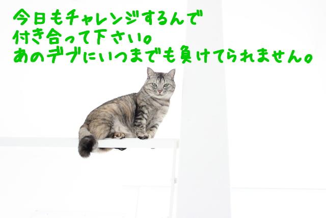 BIXGjn43b_LkDjU1427192659_1427192718.jpg