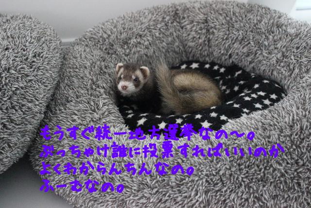 Cpg4yENZITkALXZ1428016887_1428017040.jpg