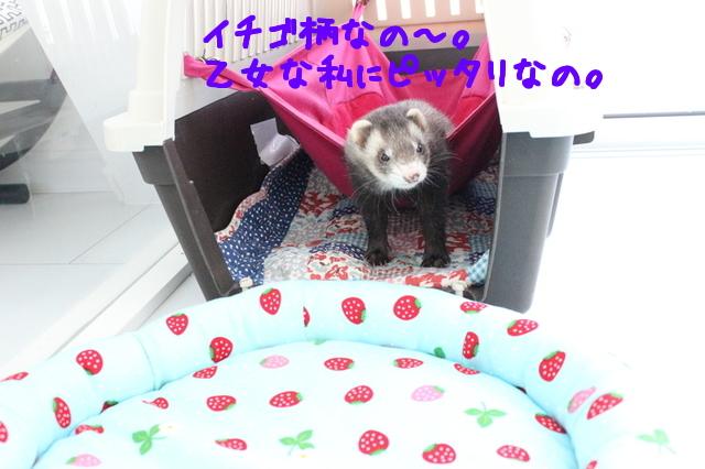 SPCeLLRTeYKTkSP1432643853_1432643912.jpg