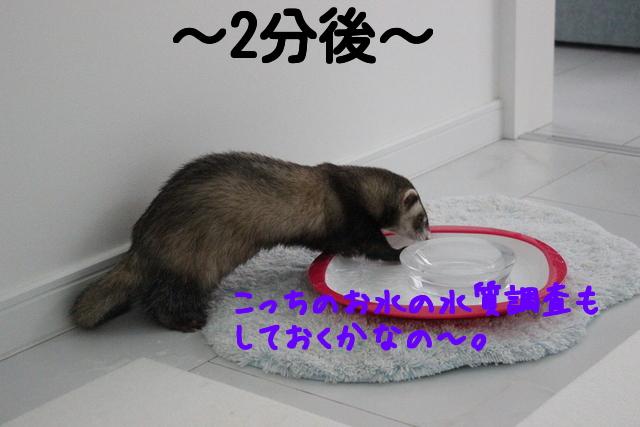 j_AL6MuR4kO0m_W1428840322_1428840423.jpg