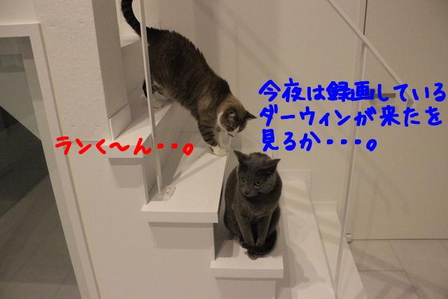 x7ydsYopUOfQFtn1422776990_1422777150.jpg