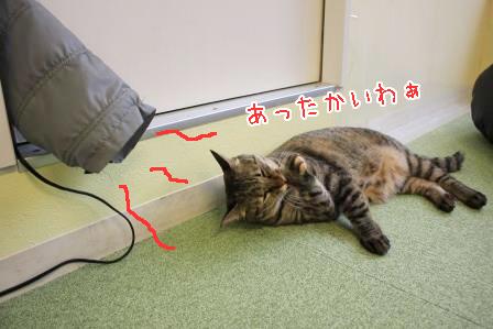 福ちゃん20150716