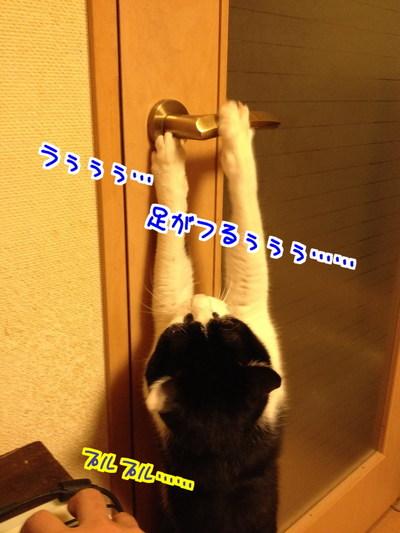 3Mng4QPI8XHcWWV1428945583_1428945822.jpg