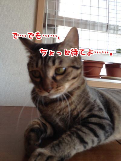 El_prLe0OfqCGpp1427808684_1427808872.jpg