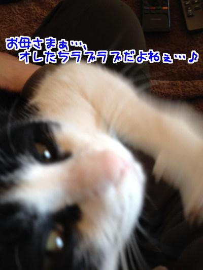 O4hRNVy_0H6UCVS1423713887_1423713961.jpg
