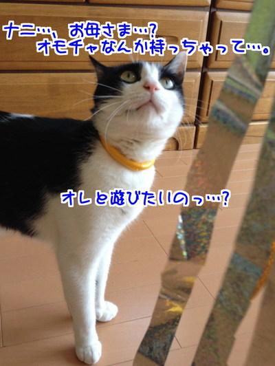 o1dCiG_3Z5hmJQe1430358511_1430358851.jpg