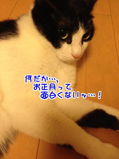 qlMDS7OKEXXu5UI1419858653_1419858774.jpg