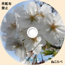 桜ラベルbd
