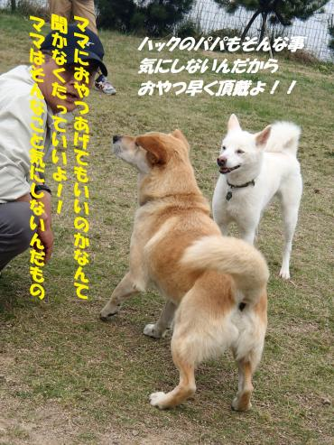 P5230044_convert_20150524090637.jpg