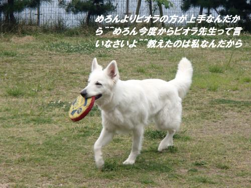 P5230048_convert_20150524090826.jpg