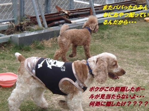 P5230049_convert_20150524090849.jpg
