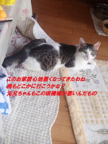 P5240055_convert_20150526131943.jpg
