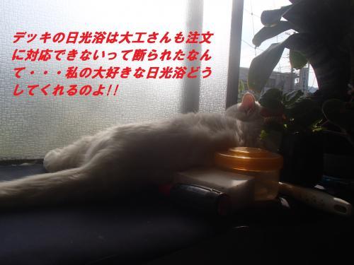 P5290116_convert_20150530123715.jpg