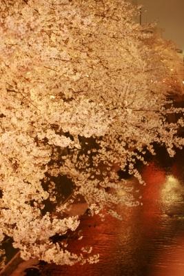目黒桜02