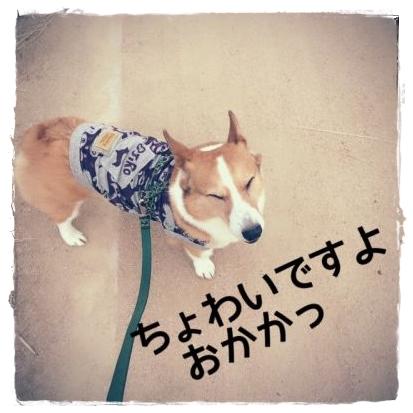 cyowai1.jpg