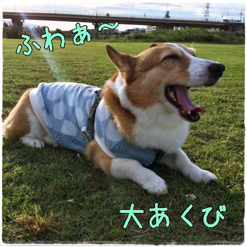fuwaa1.jpg