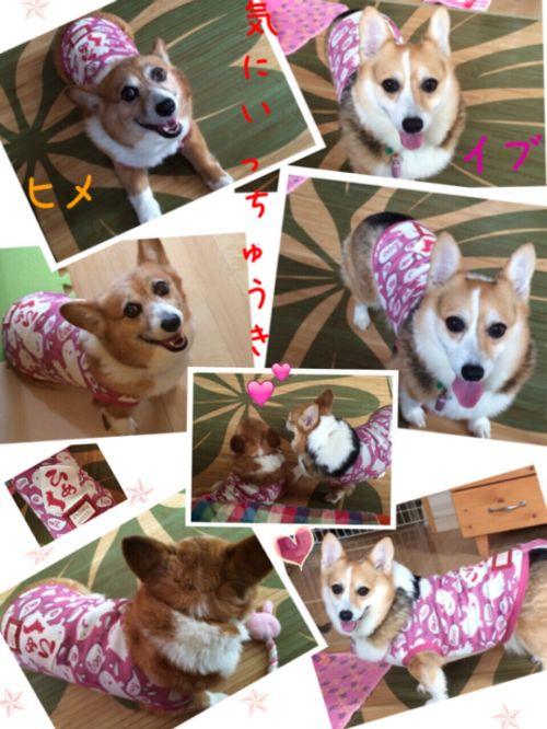 himeibu1.jpg