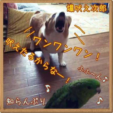 jiroku33.jpg