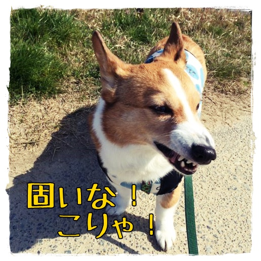 katai21.jpg