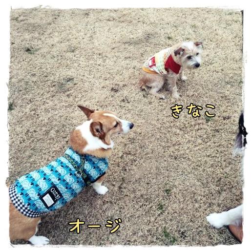 kinaoji1.jpg