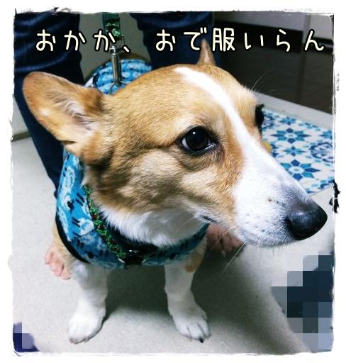 kirainano1.jpg