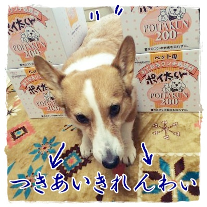 nigedashi1.jpg