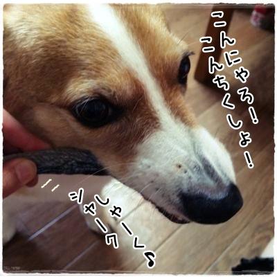 nishin2.jpg