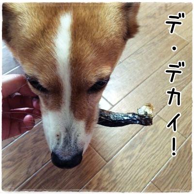 nishin3.jpg