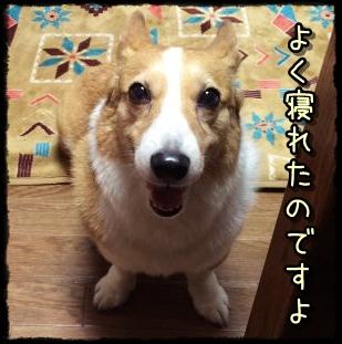 o-ji8974.jpg