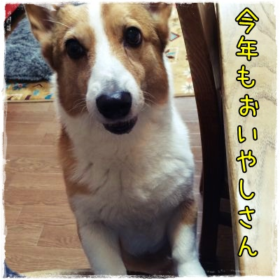 oiyashisan88.jpg