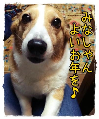 ojiko.jpg