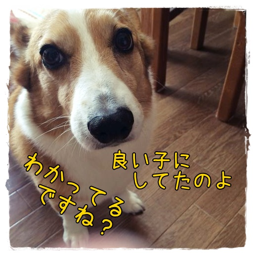 onegaishiyasu.jpg