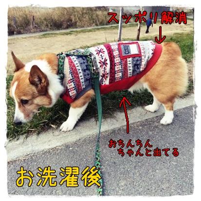 saizukan2.jpg