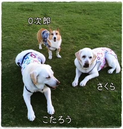 sakukotajiro1.jpg