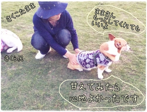 sakukotamama555.jpg