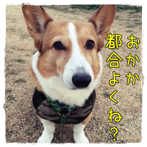 tugouyoku.jpg