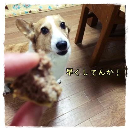 wakuwaku56.jpg