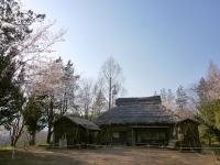 3月31日 ロケセット付近の桜