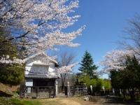 4月2日 蔵座敷周辺の桜