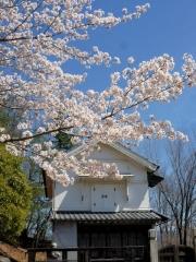 蔵座敷の桜も見頃