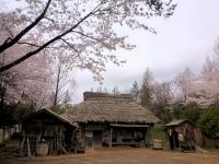 4月4日 ロケセット前の桜