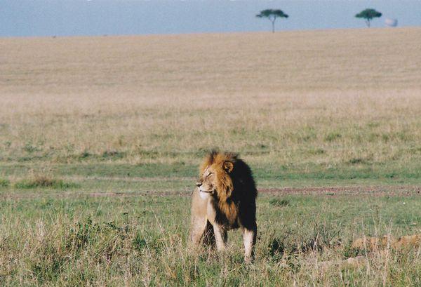 風に立つライオン(イメージです)